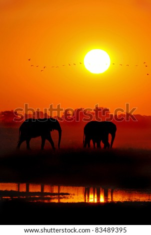 African Elephants at Sunset Loxodonta africana