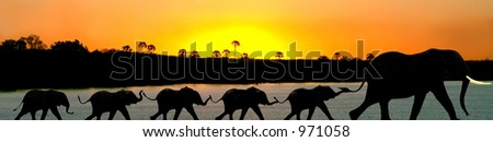 African elephants in a Zambezi sunset