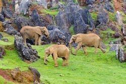 African elephants, in Cabarceno, Spain