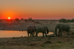 African elephants with sunset backdrop at the Okaukeujo waterhole in northern Namibia