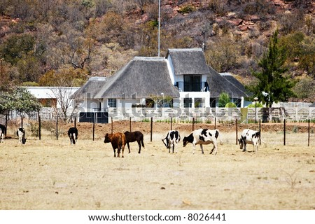 African farm, Botswana, cattle, wide land, thatched roof building, farming series