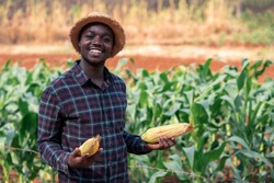 African farmer man holding a fresh corn at organic farm with smile and happy.Agriculture or cultivation concept