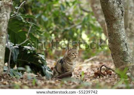 African Feral Cat camouflaged