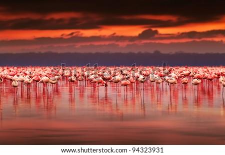 African flamingos in the lake over beautiful sunset, flock of exotic birds at natural habitat, Africa landscape, Kenya nature, Lake Nakuru national park reserve - Shutterstock ID 94323931