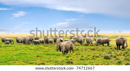 African landscape. Herd of african elephants in the swamp, Amboseli, Kenya