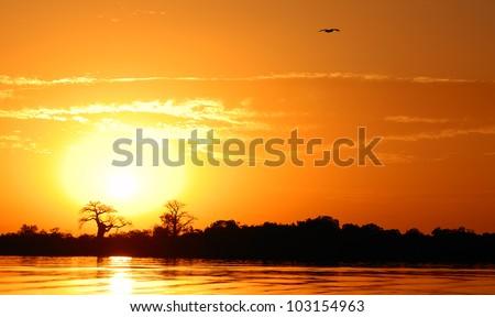 African landscape, Senegal, sine saloum