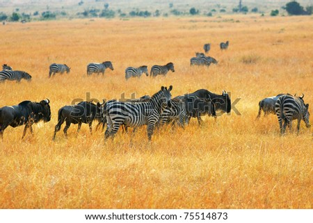 African landscape with antelopes gnu and zebras