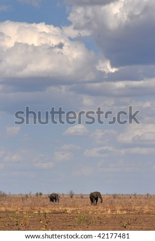 african landscape with clouds and elephants,Kruger NP,