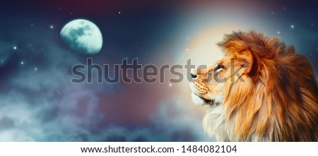 African lion and moon night in Africa. African savannah moonlight landscape, king of animals. Proud dreaming fantasy lion in savanna looking forward on stars. Majestic dramatic starry sky wide banner. #1484082104