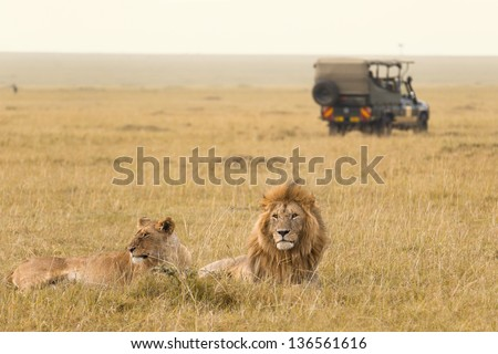 African lion couple and safari jeep in Kenya