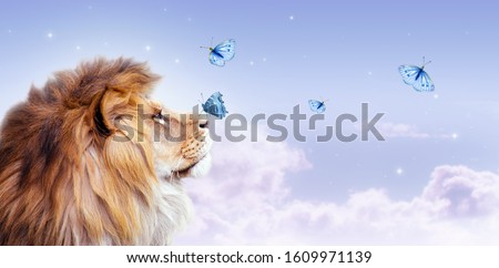 African lion with butterfly sitting on nose, morning cloudy sky banner. Landscape with magic flying butterflies in clouds, king of animals. Proud dreaming fantasy fairy tale leo looking on stars.