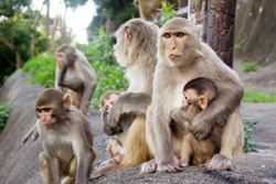 African monkey family is sitting on the mountain