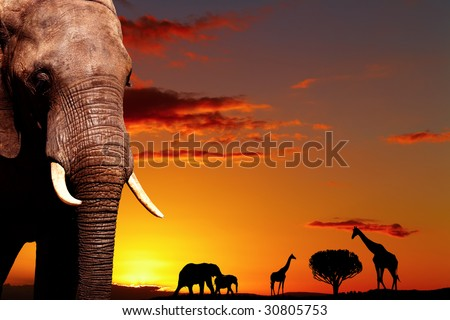 African nature concept