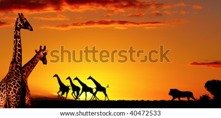 African nature concept - stock photo