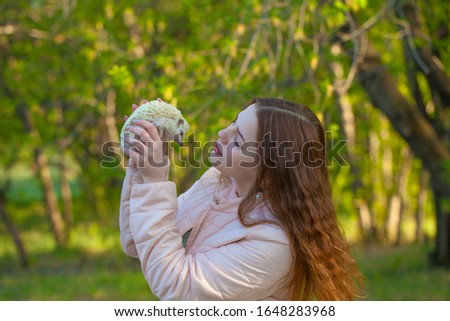 African pygmy hedgehog in the hands of a beautiful and attractive girl