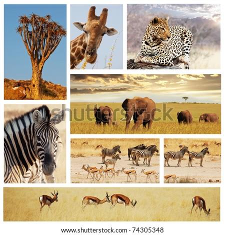 african safari collage - stock photo