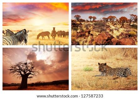 african safari collages