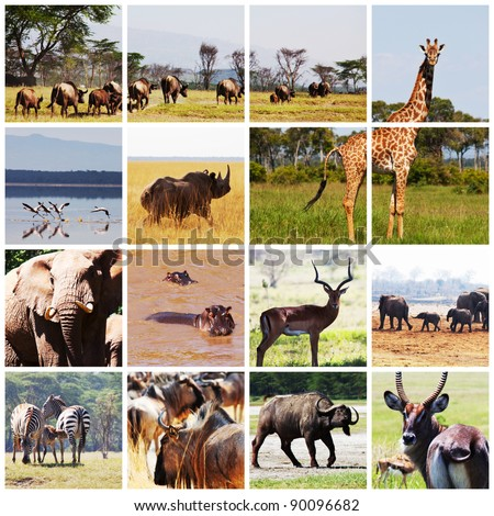 african safari in Etosha,Namibia collage