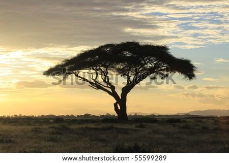 African savanna landscape at sunset