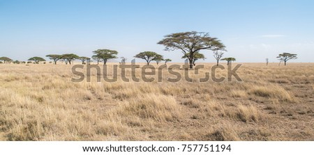 African Savannah Landscape Photo stock ©