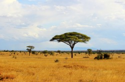 African savannah landscape in Tsavo East National Park, Kenya
