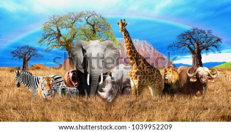 african savannah on the...