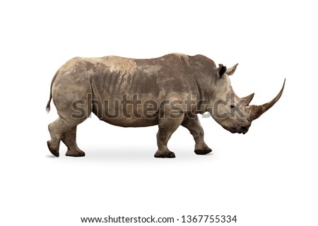 African Southern White Rhino with large pointy horn. Side profile isolated on white background Сток-фото ©