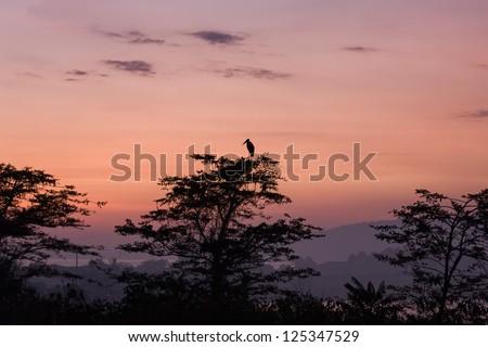 African stork bird marabou stands on tree top in sun back lighting at dawn against sunrise glowing over Victoria Lake background. Jinja, Uganda, Eastern Africa.