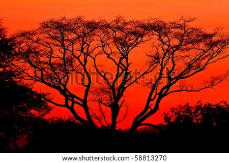 African sunrise in the Tarangire National Park, Tanzania