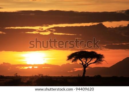 African sunset on the savanna plains