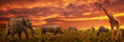 African sunset panoramic background with silhouette of the animals