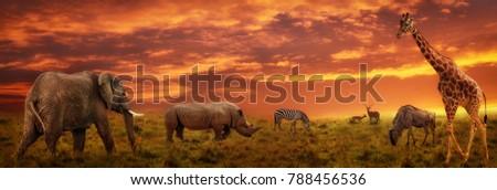 african sunset panoramic...