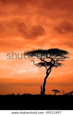 African sunset with silhouette of acacia
