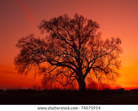 African sunset with tree