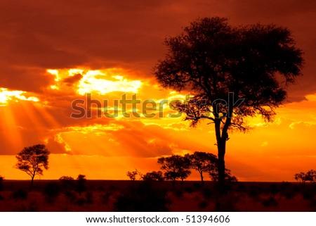 African Tree Sunset