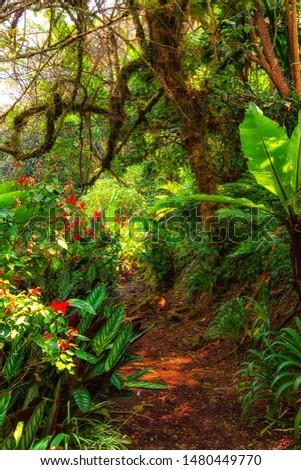 African tropical rainforest. Congo rainforest. #1480449770