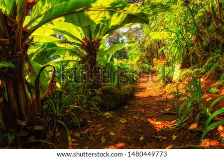 African tropical rainforest. Congo rainforest. #1480449773