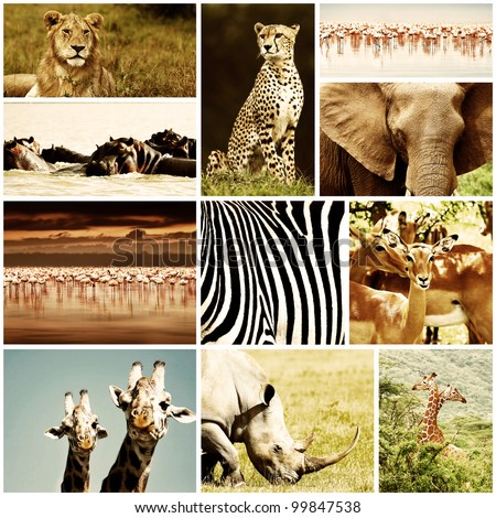 African wild animals safari collage, large group of fauna diversity at African continent, natural themed collection background, beautiful nature of Kenya, wildlife adventure and travel #99847538