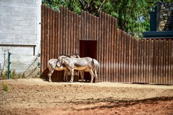 African wild donkey at the zoo on a summer day, Israel. Selective focus.