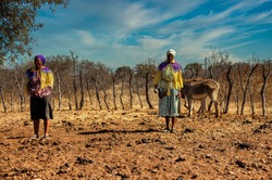 african woman with donkeys in the krall near her rondavel house in a village in botswana
