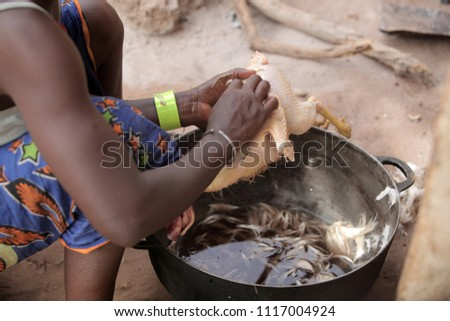 african woman work: ramadan cooking - big black iron pot with hot water anf black hand holding chicken, close up outdoors on a sunny day in the Gambia, Africa during dry season