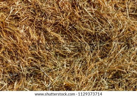 after harvest yellow dry texture of straw grass #1129373714
