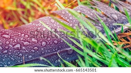 Stock Photo After rain. Feather stork in the grass with water droplets.
