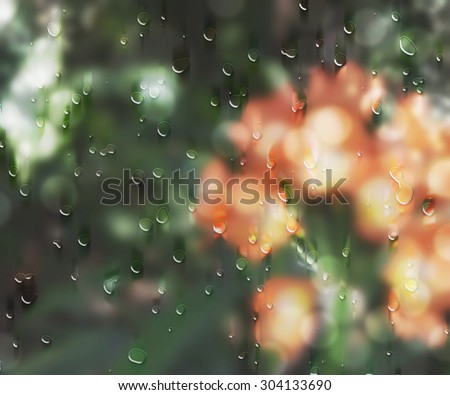 After the rain beautiful nature. Orange and red flowers and green plants behind the wet window with rain drops. Sunshine after heavy rain.
