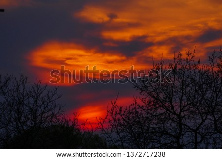Afterglow, sundown with silhouette of trees  #1372717238