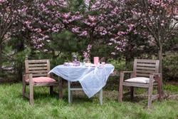 Afternoon tea in the garden, under a cherry blossom. A beautiful spring afternoon in the garden.