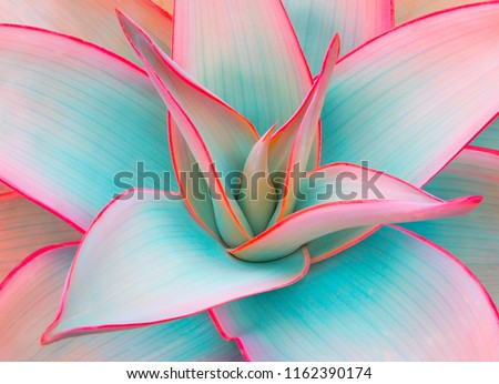 agave leaves in unusual trendy pastel colors for design backgrounds #1162390174