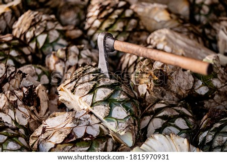 Agave mezcal, mezcal production, cooking agave