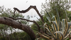 Agave plant at the seacoast