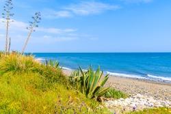 Agave plant on beach near Estepona town on Costa del Sol, Spain